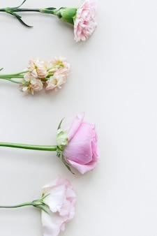 Kwitnące kolorowe kwiaty w tle