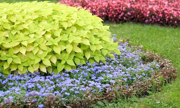 Kwitnące kolorowe kwietniki w letnim parku miejskim