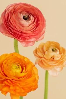 Kwitnące kwiaty jaskier