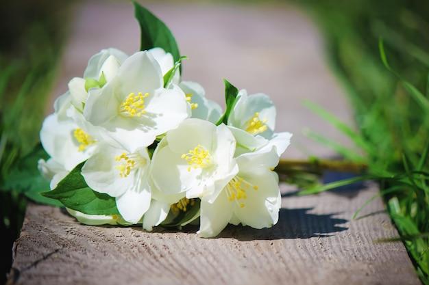 Kwitnące kwiaty jaśminu. selektywna ostrość. kwiaty natury.