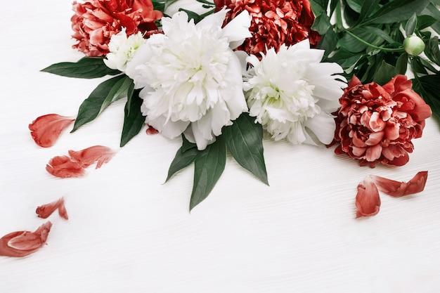 Kwitnące kwiaty piwonii. czerwone i białe peonie na drewnianym tle z kopii przestrzenią. widok z góry. leżał płasko.