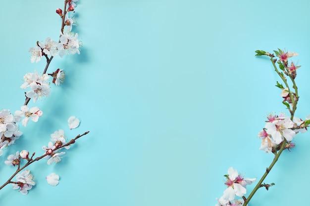 Kwitnące kwiaty wiśni na pastelowo-niebieskiej powierzchni