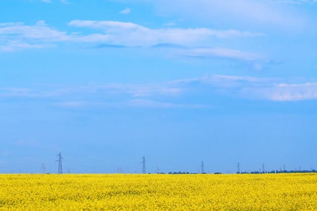 Kwitnące pole, daleko widać linię energetyczną