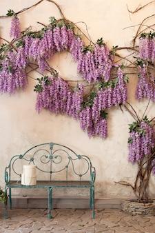 Kwitnące rośliny glicynia na ścianie ściany domu z ławką. wisteria w pełnym rozkwicie w spokojnym zakątku ogrodu z ławką. idealne miejsce dla prywatności i spokoju. czas wiosny.
