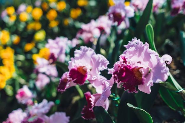 Kwitnące różowe kwiaty, rośliny tropikalne