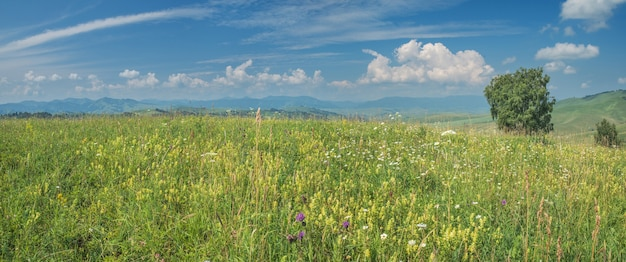 Kwitnące wzgórza i błękitne niebo z chmurami