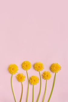 Kwitnące żółte Kwiaty Mniszka Lekarskiego Na Różowym Tle Papieru Płasko Leżał Z Miejsca Na Kopię. Koncepcja Minimalizmu. Premium Zdjęcia