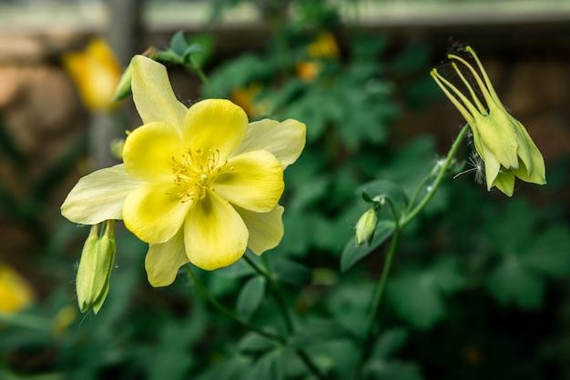 Kwitnące żółte kwiaty wiosną.