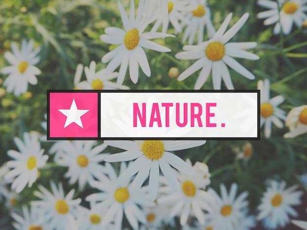 Kwitnący botaniczny ogród kwiatowy natura lato