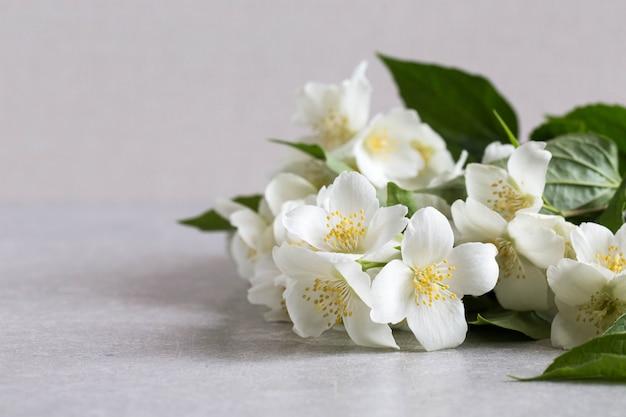 Kwitnący delikatny biały kwiat jaśminu