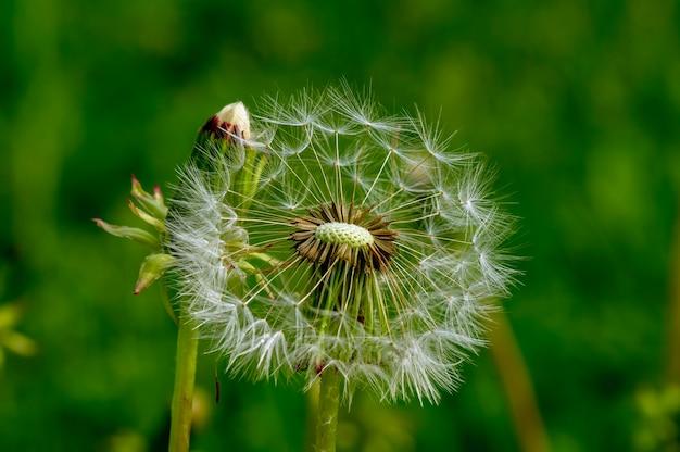 Kwitnący dziki kwiat w słoneczny dzień na naturalne tło