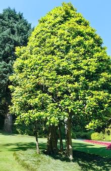 Kwitnący kolorowy kwietnik i drzewa w letnim parku miejskim