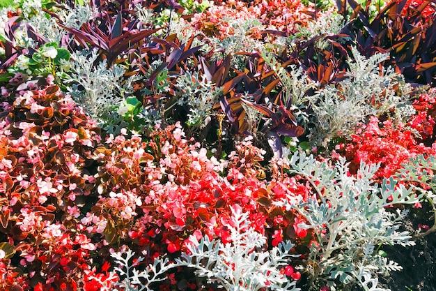 Kwitnący kolorowy kwietnik w letnim parku miejskim