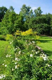 Kwitnący krzew z białymi kwiatami w letnim parku miejskim