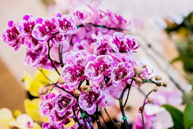 Kwitnący kwiat orchidei w ogrodzie