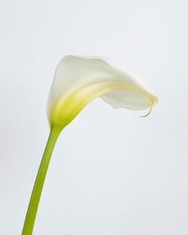 Kwitnący kwiat z bliska
