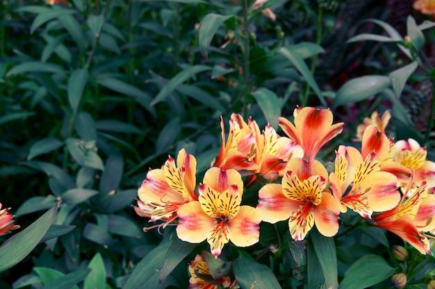 Kwitnący kwiaty i drzewo w kwiat kopule przy ogródami zatoką, singapur