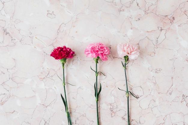 Kwitnący różowy kwiat goździka na marmurowym tle