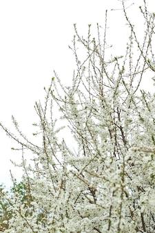 Kwitnący sad jabłoniowy na wiosnę. świat piękna.