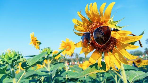 Kwitnący słonecznik z niebieskim niebem na lato. roślina i drzewo z naturalnym tłem