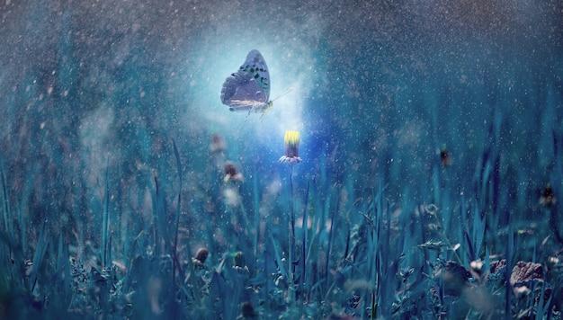 Kwitnący żółty mniszek lekarski w nocy w gęstej trawie i latającym motylu. mistyczne tło z blaskiem i rozpryskami wody, magiczny świat natury