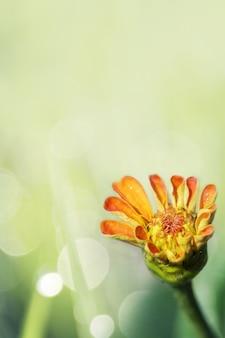 Kwitnie letni kwiat