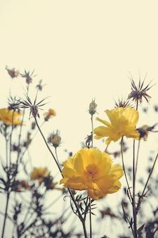 Kwitnie rocznik naturę piękną, tonującą wiosny naturę