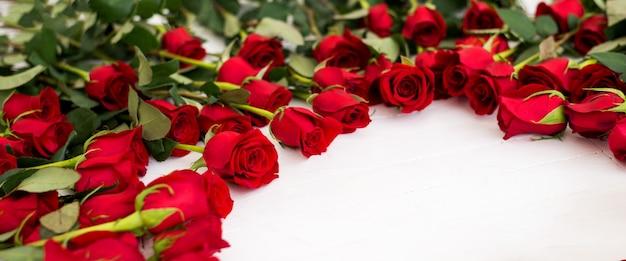 Kwitnie tło z różami na kredowym tle.