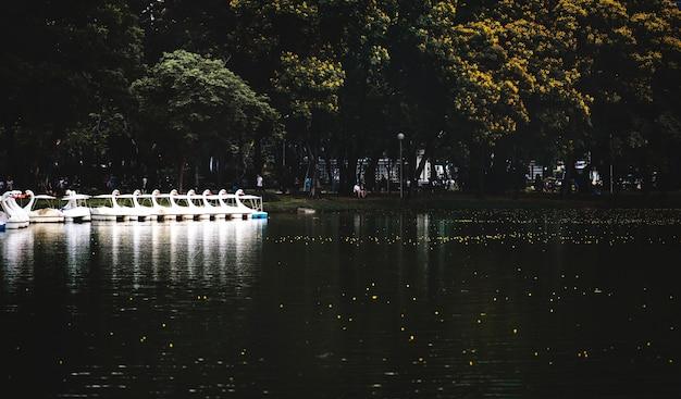 Łabędź paddle łodzie w lumphini parku, bangkok