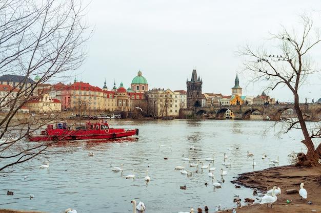 Łabędzie w pradze na rzece krajobraz / czeska stolica, białe łabędzie na rzece obok mostu karola, republika czeska, turystyka