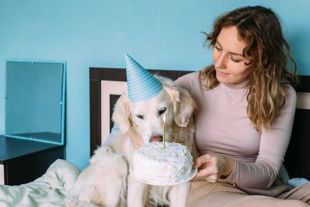 Labrador golden retriever pies świętuje urodziny w czapce i z ciastem