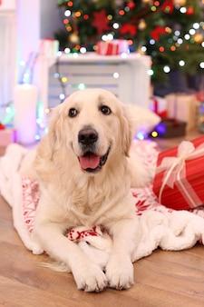Labrador leżący na kratę na drewnianej podłodze i świątecznych dekoracjach