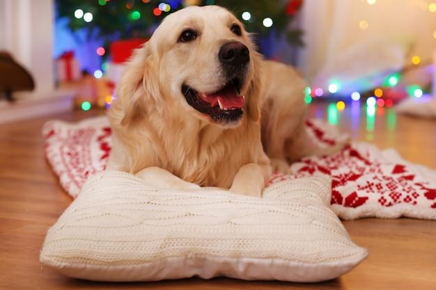 Labrador leżący na kratę na drewnianej podłodze i tle dekoracji świątecznej
