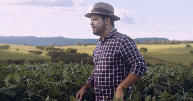 Łaciński rolnik idący przez pole sprawdzające uprawy soi