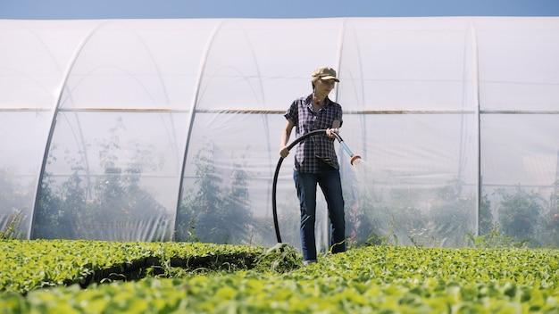 Ładna kobieta rolnik nawadnia młode zielone sadzonki na polu w pobliżu szklarni.