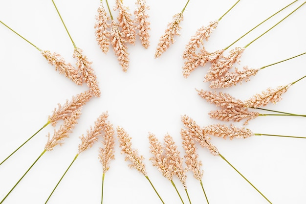 Ładna kompozycja wykonana z liści pszenicy na białym tle