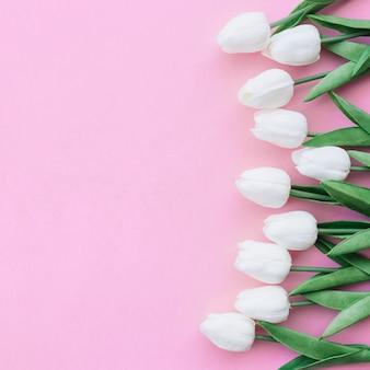 Ładna kompozycja z białymi tulipanami na pastelowym różowym tle z copyspace po lewej si