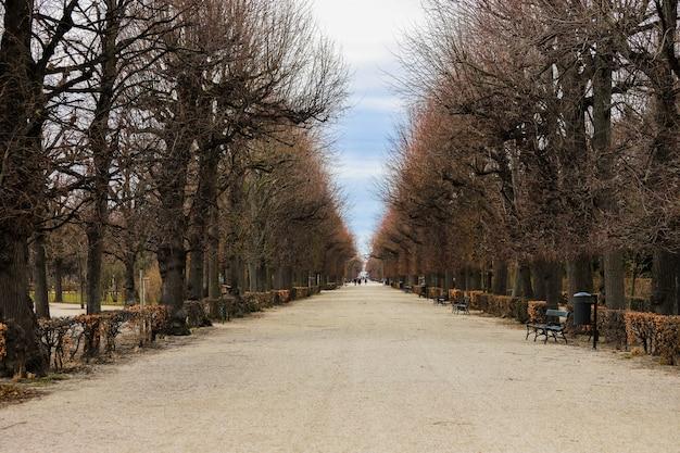 Ładna polna droga z wieloma wysokimi drzewami jesienią bez liści.