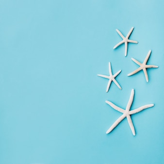 Ładna rodzina rozgwiazdy na niebieskim podziemiu