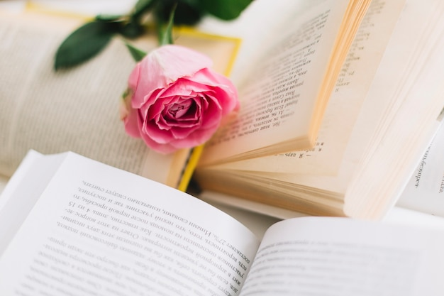 Ładna róża na otwartych książkach
