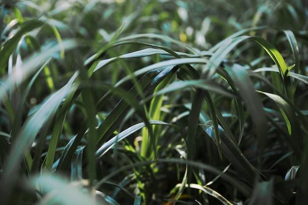 Ładna trawa w ogródzie