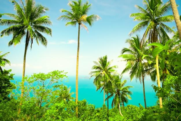 Ładne tło tropikalne