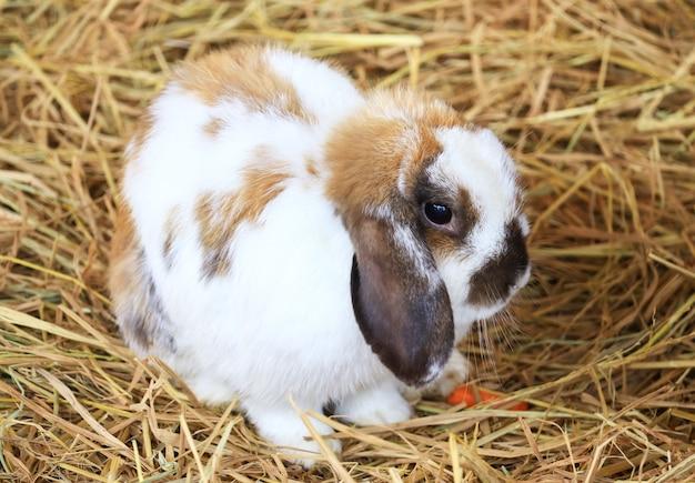 Ładny biały brązowy królik na słomie