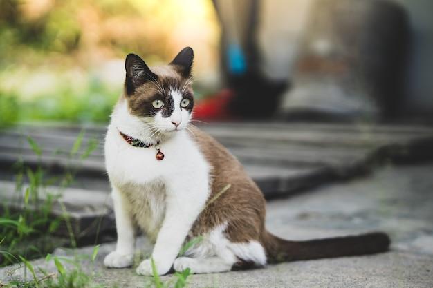 Ładny brązowy i biały kot bawi się w ogrodzie.