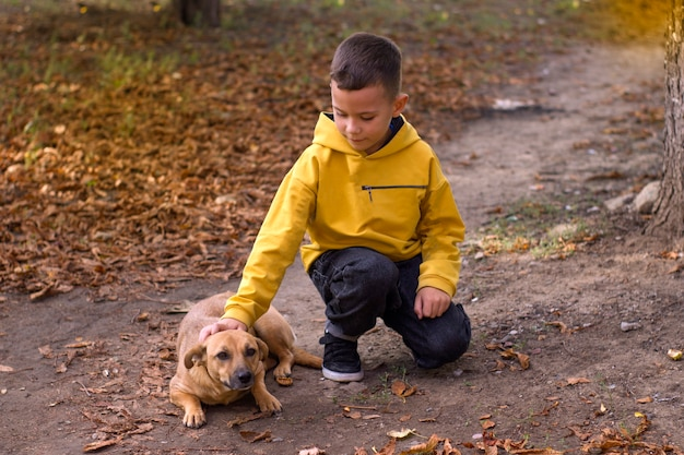 Ładny chłopak głaszcząc bezpańskiego psa w jesiennym parku.