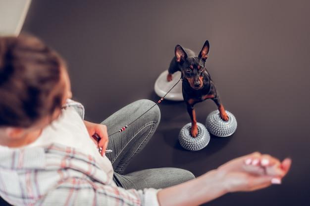 Ładny ciemny pies. widok z góry na troskliwą właścicielkę pokazującą jedzenie swojemu uroczemu, ciemnemu psu
