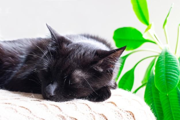 Ładny czarny kot śpi w pobliżu zielonej rośliny doniczkowej. koncepcja przytulności i spokoju. kompozycja w stylu hygge