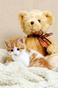 Ładny czerwony kotek z misiem