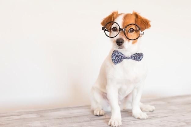 Ładny inteligentny pies z muszką i okularami.
