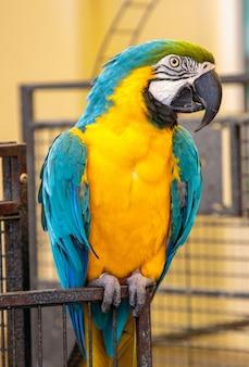 Ładny jasny kolorowy papuga. widok dzikiej papugi ara.